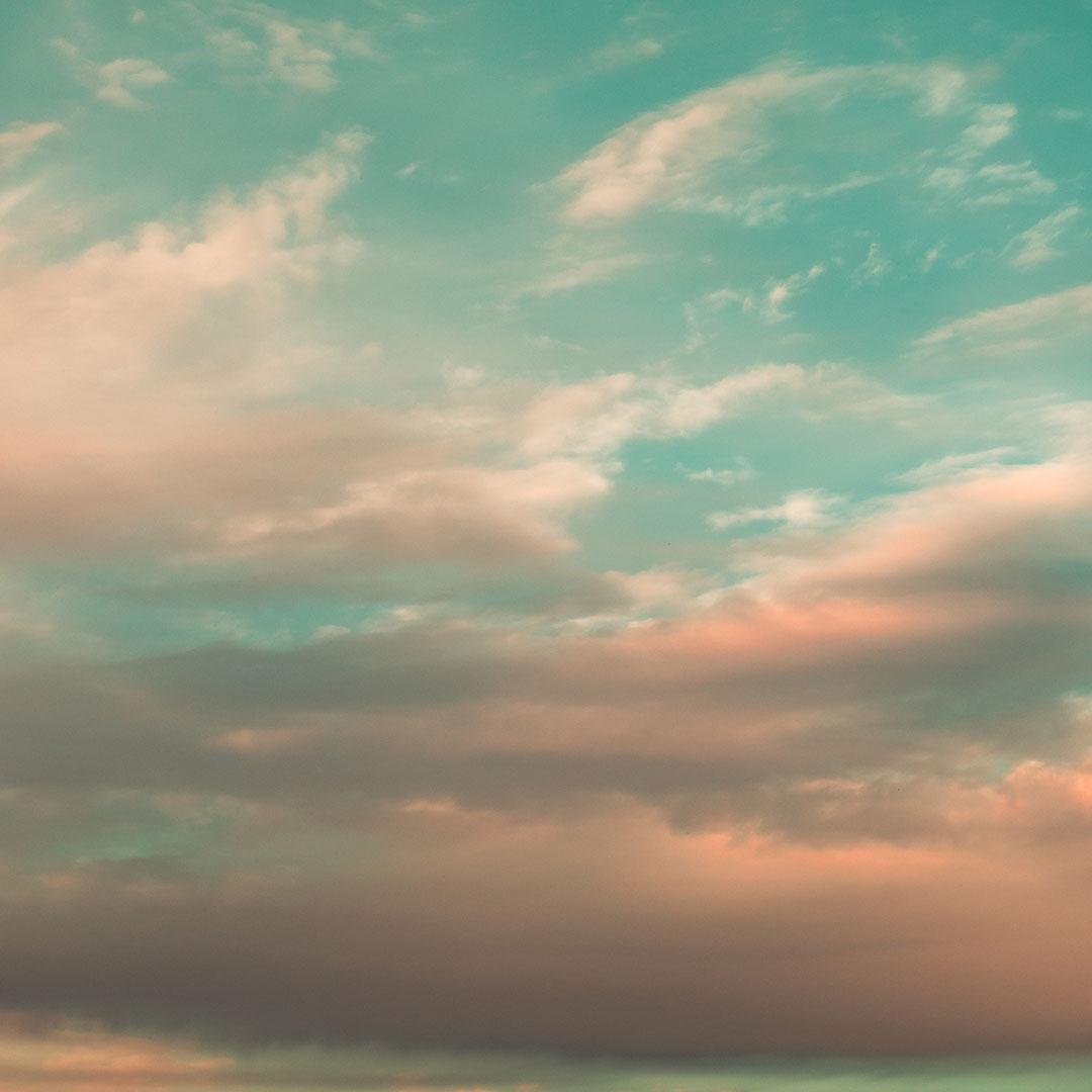 Farski pies lecom